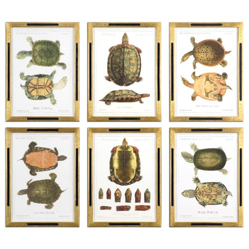 Uttermost Art Tortoise Study Framed Art, S/6