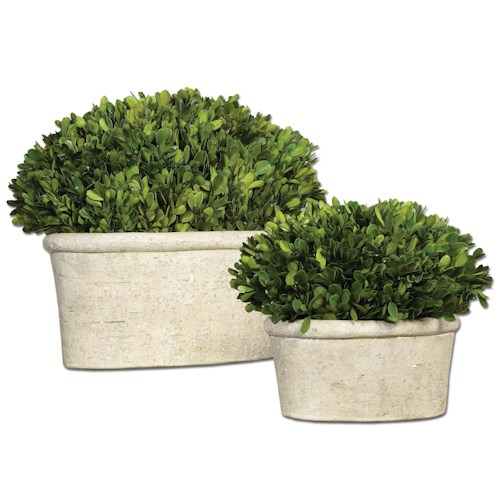 Uttermost Botanicals Preserved Boxwood Oval Domes Set of 2