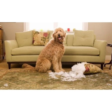 Furniture Protection $2,000-2,499