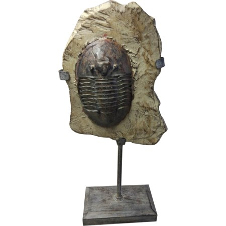 Trilobite Fossil On Stand