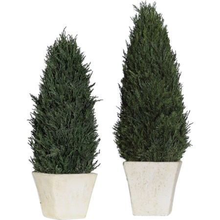 Cypress Cone Topiaries, S/2