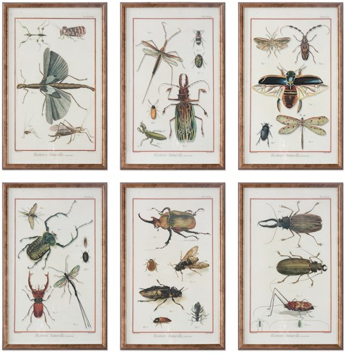Uttermost Art Multi Insect Prints, S/6