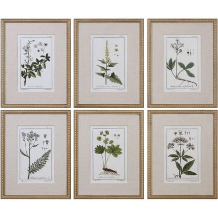 Green Floral Botanical Study (Set of 6)