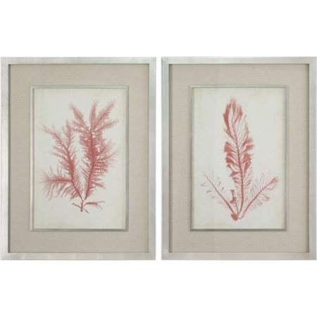 Coral Sea Feathers Prints