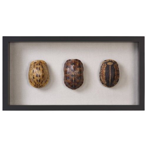 Uttermost Alternative Wall Decor Tortoise Shells Shadow Box